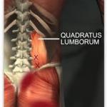 quadratus lumborum